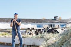 Agricoltore dell'uomo che lavora all'azienda agricola con le mucche da latte Fotografie Stock