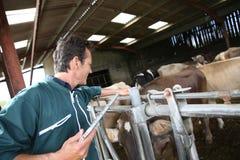 Agricoltore dell'uomo moderno in granaio facendo uso della compressa Immagine Stock