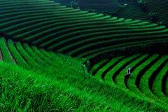 Agricoltore della cipolla Fotografia Stock