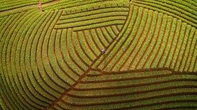 Agricoltore della cipolla di Argapura Majalengka Java ad ovest Immagini Stock Libere da Diritti