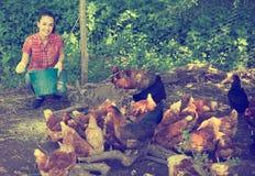Agricoltore della giovane donna che dà la roba di alimentazione Fotografia Stock