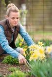 Agricoltore della ragazza che lavora nel giardino con i fiori Piantagione del da Immagini Stock Libere da Diritti