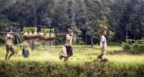 Agricoltore della ragazza e del ragazzino Fotografie Stock Libere da Diritti