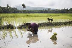 Agricoltore della Tailandia Fotografia Stock Libera da Diritti