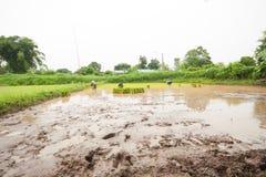 Agricoltore della Tailandia Immagine Stock