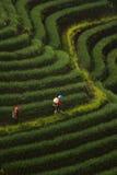 Agricoltore delle cipolle Fotografia Stock