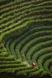 Agricoltore delle cipolle Fotografie Stock Libere da Diritti