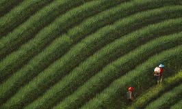 Agricoltore delle cipolle Immagine Stock Libera da Diritti