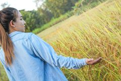 Agricoltore delle donne nel giacimento di grano maturo Immagini Stock
