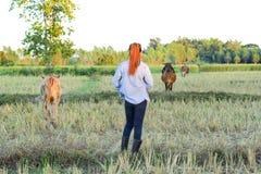 Agricoltore delle donne nel riso del campo Immagini Stock