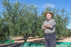 Agricoltore delle olive Immagini Stock