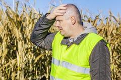 Agricoltore depresso sul campo di grano freddo Fotografia Stock