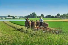 Agricoltore di Amish a Lancaster, PA Fotografie Stock Libere da Diritti