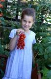 Agricoltore di bambino della finestra nel balcone con i pomodori rossi Fotografia Stock