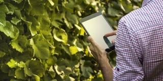 Agricoltore di Digital che controlla il suo campo Immagini Stock