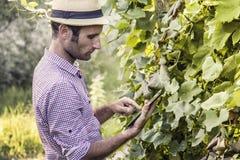 Agricoltore di Digital che controlla il suo campo Fotografie Stock