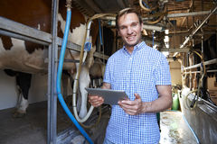Agricoltore di latteria Using Digital Tablet nella mungitura sparsa Immagine Stock