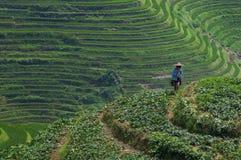 Agricoltore di Locar che lavora nei giacimenti a terrazze del riso vicino al villaggio di Dazhai in Cina Fotografie Stock Libere da Diritti