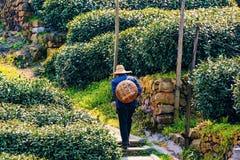 Agricoltore di tè cinese Fotografia Stock
