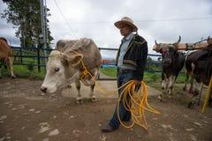 Agricoltore di tico di Costa Rican Fotografia Stock Libera da Diritti
