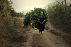Agricoltore di viet Immagine Stock Libera da Diritti
