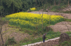 Agricoltore di zappatura Immagine Stock Libera da Diritti