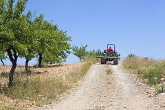 Agricoltore Driving Tractor On Hillside Fotografie Stock