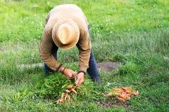 Agricoltore e bio- carote Fotografia Stock Libera da Diritti