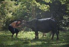 Agricoltore e bufali d'acqua asiatici Fotografie Stock Libere da Diritti