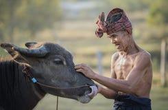 Agricoltore e bufalo tailandesi Fotografia Stock