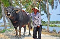 Agricoltore e bufalo, Vietnam Immagine Stock