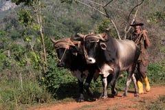 Agricoltore e cablaggio su un percorso della valle cubana Fotografie Stock Libere da Diritti