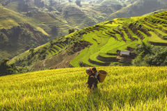 Agricoltore e figlia che escono fare di mattina, il Vietname Fotografie Stock Libere da Diritti