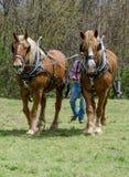 Agricoltore e gruppo dei cavalli di aratro Fotografie Stock Libere da Diritti