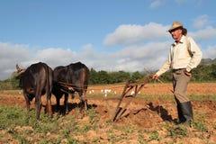 Agricoltore e le sue mucche Immagini Stock