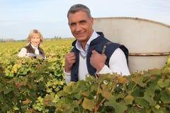 Agricoltore e moglie che raccolgono l'uva Fotografia Stock Libera da Diritti