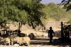 Agricoltore e pastore sulla strada della campagna in Argentina Fotografie Stock Libere da Diritti