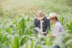 Agricoltore e ricercatore che analizzano la pianta di cereale fotografia stock