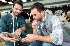 Agricoltore e veterinario che lavorano insieme in un granaio Fotografia Stock Libera da Diritti