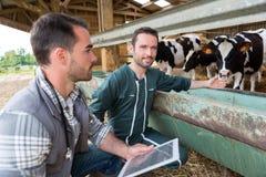 Agricoltore e veterinario che lavorano insieme in un granaio Immagini Stock Libere da Diritti