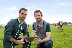 Agricoltore e veterinario che lavorano insieme in un masture con le mucche Immagini Stock Libere da Diritti