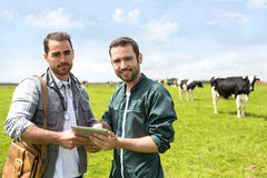 Agricoltore e veterinario che lavorano insieme in un masture con le mucche Fotografie Stock