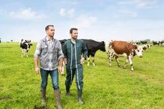 Agricoltore e veterinario che lavorano insieme in un masture con le mucche Fotografie Stock Libere da Diritti