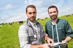 Agricoltore e veterinario che lavorano insieme in un masture con le mucche Fotografia Stock Libera da Diritti
