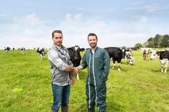 Agricoltore e veterinario che lavorano insieme in un masture con le mucche Immagine Stock Libera da Diritti