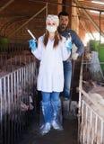 Agricoltore e veterinario in porcile Fotografia Stock Libera da Diritti