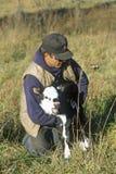 Agricoltore e vitello sull'azienda agricola di bestiame, Bourbon, Mo Fotografia Stock