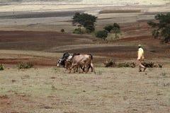 Agricoltore ed agricoltura in Etiopia Immagine Stock