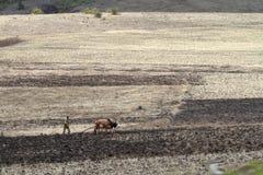 Agricoltore ed agricoltura in Etiopia Fotografia Stock Libera da Diritti