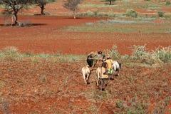 Agricoltore ed agricoltura in Etiopia Fotografia Stock